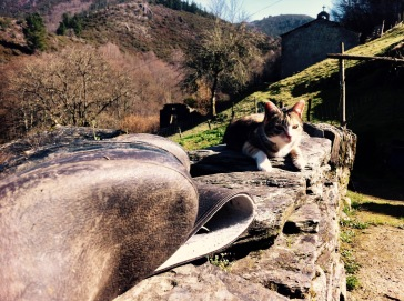 cat sunbathing in the sun standing in a stone, asturias, north of Spain