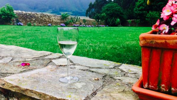 wine in a garden, north of Spain, Asturias